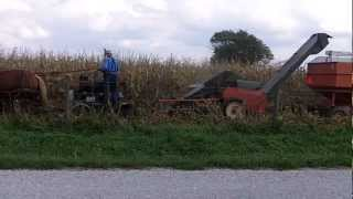 Amish Picking Corn With 8 Horse Hitch