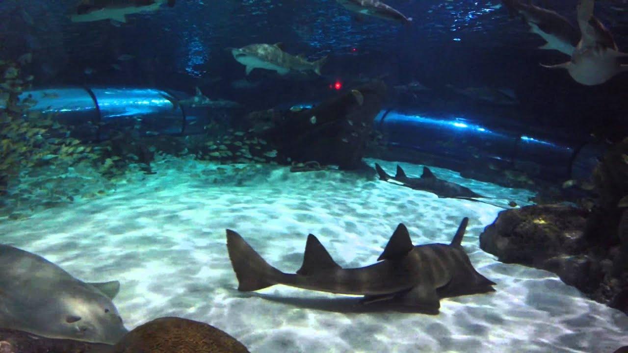 Ripley S Aquarium Myrtle Beach Sc Gopro Hero 3 Hd