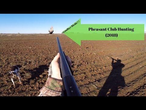 Pheasant Hunting!