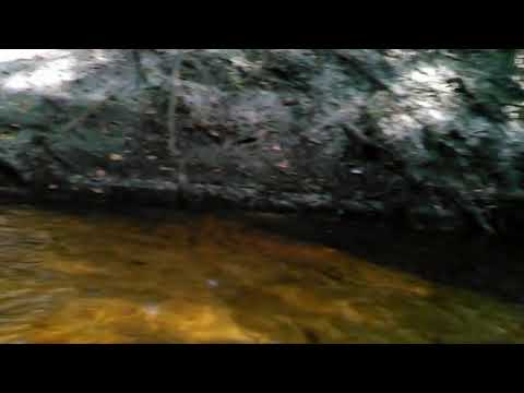 Alapahoochee River Confluence