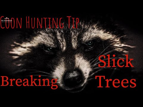 Coon Hunting Quick Tip/ Breaking Slick Trees