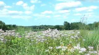 Delaware Native Pollinator Project