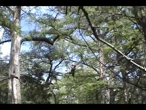 Cypress Valley Canopy Tours In Spicewood Texas
