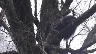 Пожарные в Смоленской области спасли котёнка с дерева