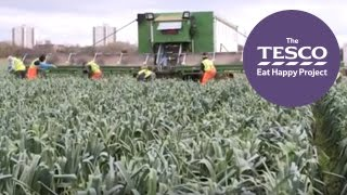Leeks: from Farm to Fork