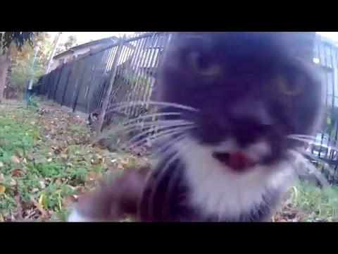 可愛い鳴き声 公園で見つけた 可愛い子猫 cute kittens meowing