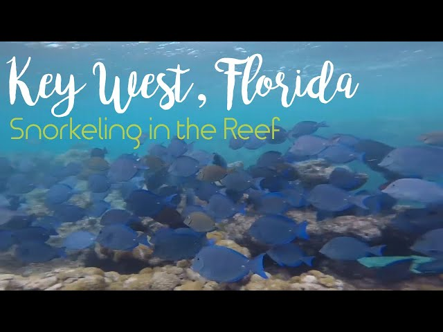 Snorkeling in Key West, Florida - 4K Underwater Footage