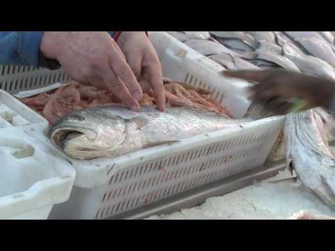 Helping To Improve Seafood Safety
