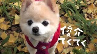 【宝島社】『俊介てくてく うごく! 俊介DVD付き』CM 俊介くん 検索動画 7