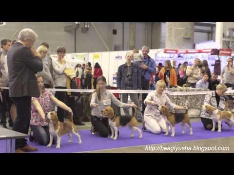 Киев-2014 Международная выставка собак всех пород FCI CACIB \