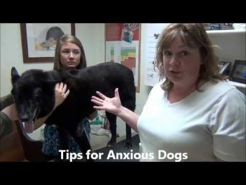 Cleaning Your Pet's Ears: A Full Circle Veterinary Care Instructional Video
