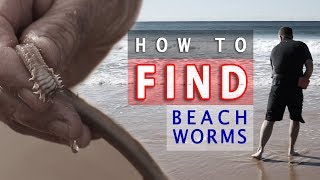 How to FIND Beach Worms!