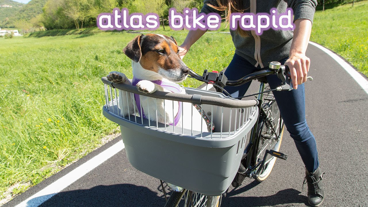 Bike Carriers For  Dogs