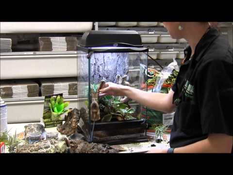How to Set Up Bumblebee Arrow Frogs