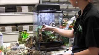 How to Set Up Bumblebee Arrow Frogs