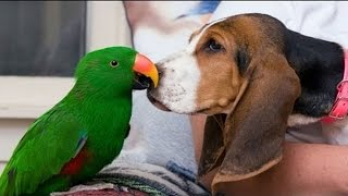 Funny Parrots Annoying Dogs 2014 [NEW HD]