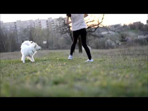Trailer l Dog tricks video l - Berie - German Spitz