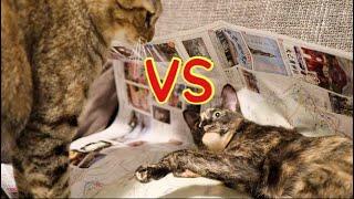 猫の喧嘩です このくらいは毎日なのでレベル1としました( ´ー`) 土...