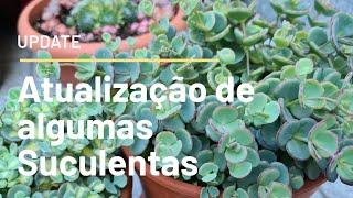 MINHAS SUCULENTAS  - Update de algumas suculentas   Fran natura