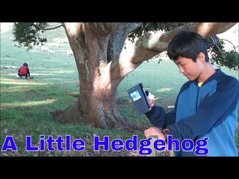 A little hedgehog, One tree hill park