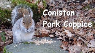 Coniston park coppice, Cumbria
