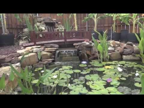Backyard koi pond youtube for Koi pond music