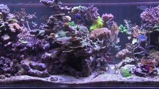 Peter's Fish Tank - Episode 3.2 - Eye Candy