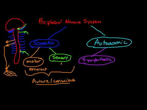 Introduction to the peripheral nervous system