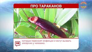 На улицах Сочи появились гигантские летающие тараканы