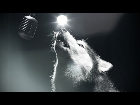 Dogs Singing ★ BEST Singing Dog VIDEOS [Funny Pets]