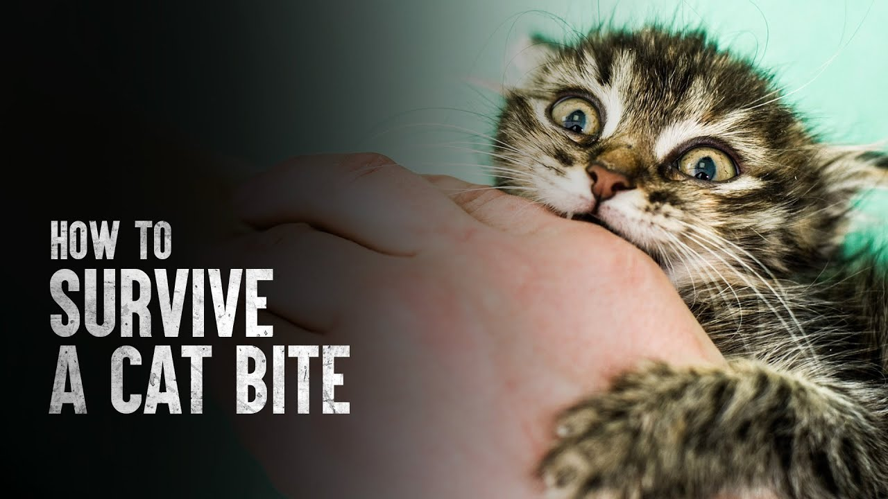 How to Survive a Cat Bite
