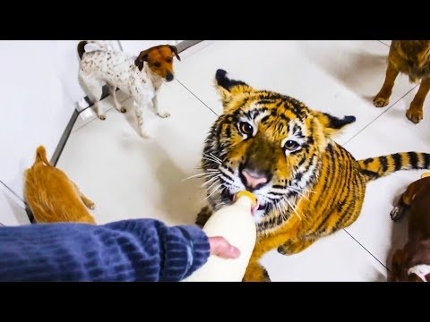 10 most awesome and unusual pets ever