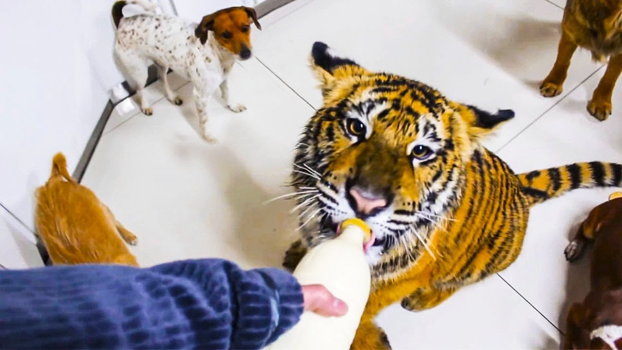 ???? 10 most awesome and unusual pets ever