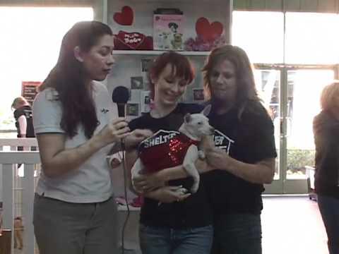 Shelter Hope Pet Shop Story
