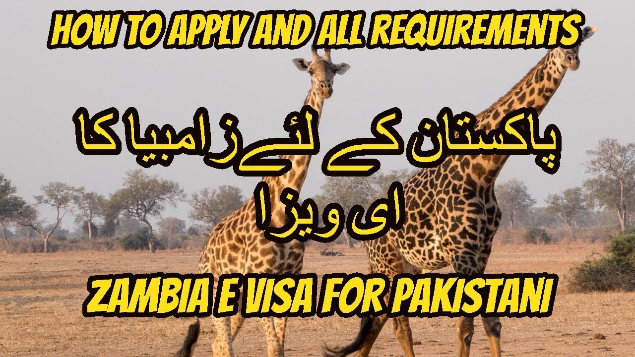 Zambia e visa for pakistani how to apply