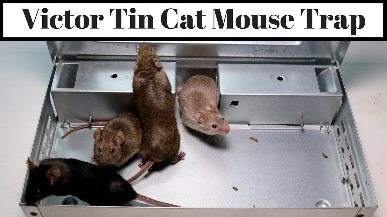 victor-tin-cat-mouse-trap-can-catch-30-mice-in-one-night