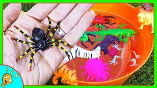 Learn Colors of JUNGLE Animals with Orange Water by Squishee Nugget