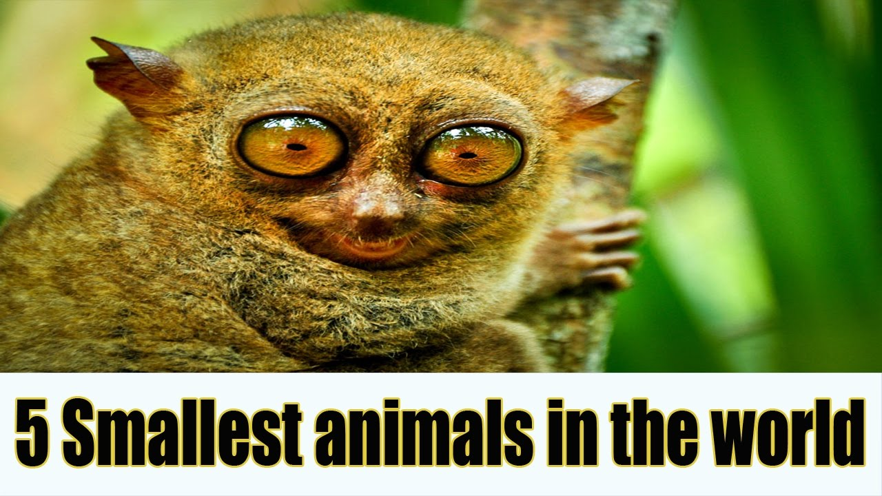 1000+ images about Smallest animals ever on Pinterest ... |The Shortest Animal Ever