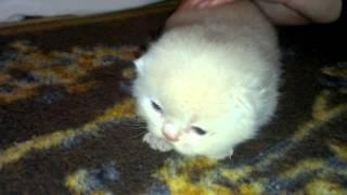 Наша гордость котенок по имени Аскольд!