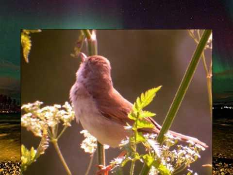 Ray Phillips & Zalatnay Sarolta - Little bird.WMV