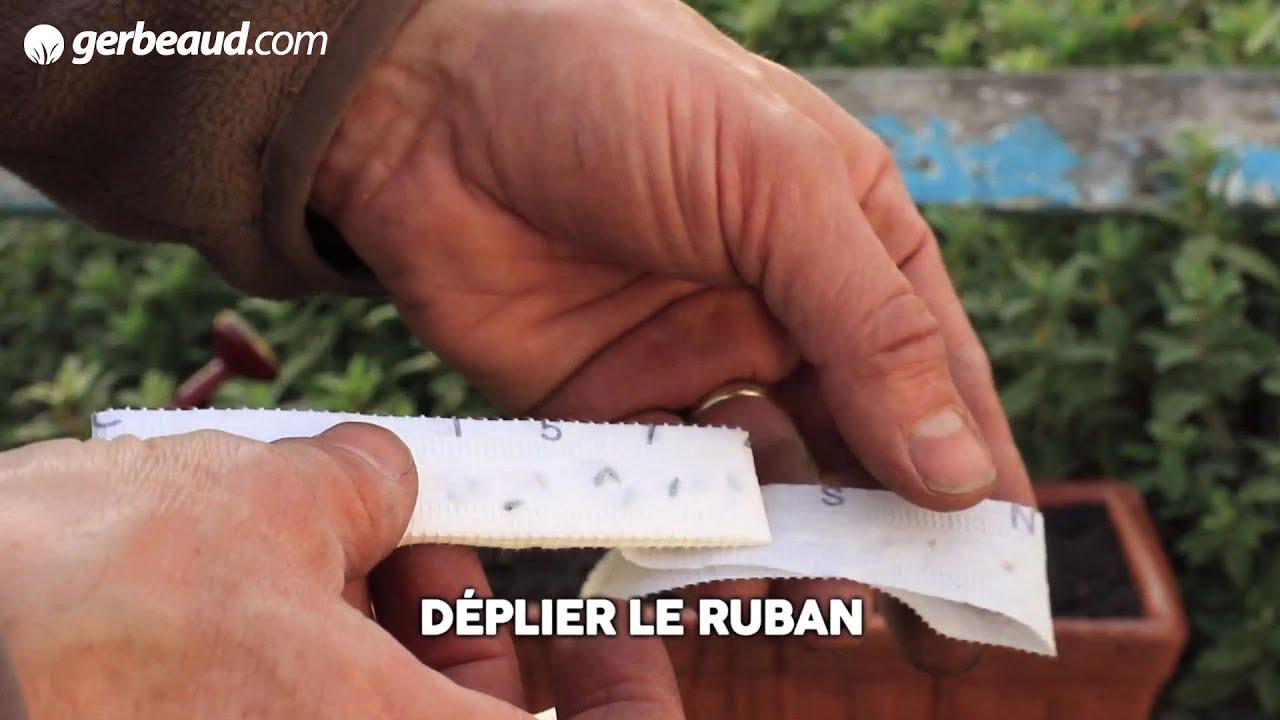 Comment Planter De L Échalote echalote : plantation, culture et récolte