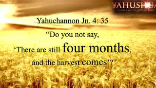Pagan Pentecost or Scriptural Shavuot?