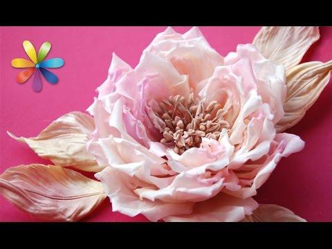 Цветы картинки все