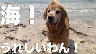 5月の海を大喜びで泳いでくれた最愛の愛犬