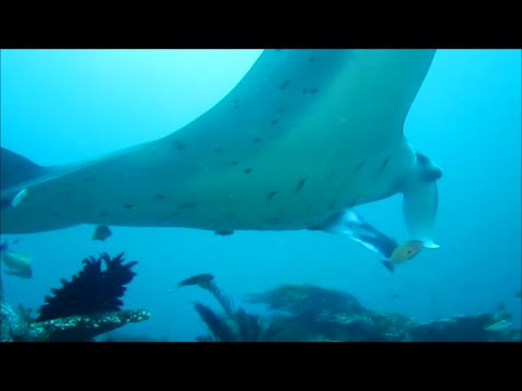 Diving KOMODO N.P. - Indonesia's best dive sites + MANTA POINT