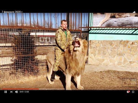 Человек -Лев сидит верхом на ОГРОМНОМ ЛЬВЕ !!!