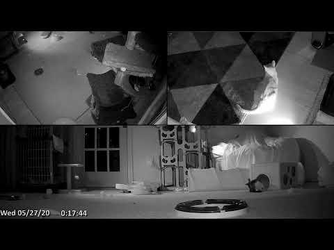 Kitten Academy Live Stream - YouTube