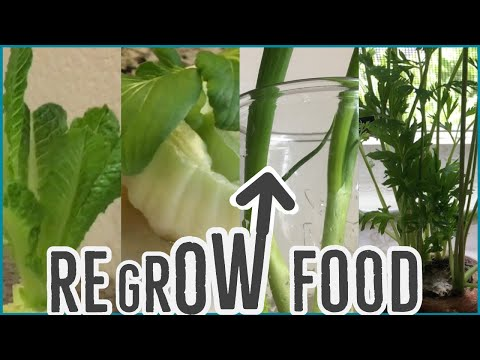 Regrow Vegetables from Scraps in Water | 4 Fool Proof Veggies & How We Eat Them | Frugal Living