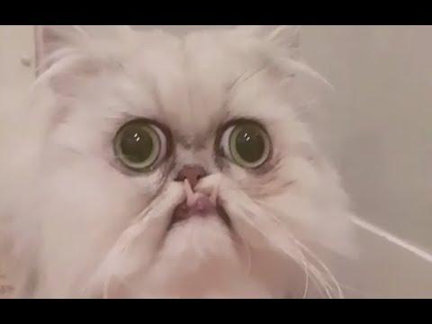 The Ugliest Cat