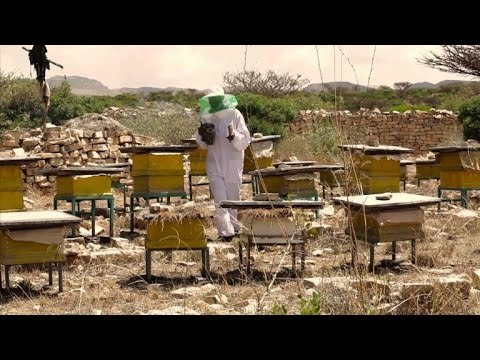 Can Ethiopia make a beeline to successful honey export business?